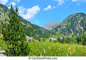 Picturesque mountain landscape,meadow, hiking trail and sky.
