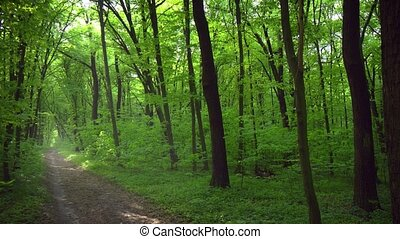 Deciduous trees shade a picturesque nature trail as it passes beneath branches of deciduous trees in this forested wilderness area.