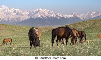Picturesque pasture HD