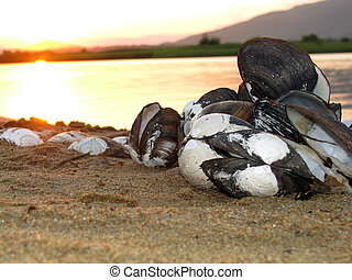 picturesque pile of shells on the sand on the lake