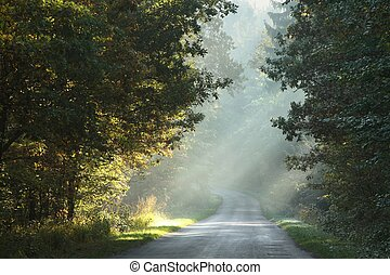 Picturesque rural road at dawn