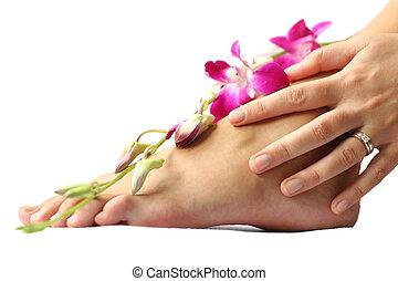 pie, orquídea