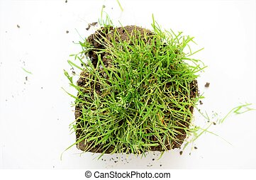 piece of a soil with green grass in studio