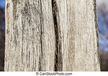 piece of cut wood