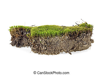 Piece of green moss isolated on a white background