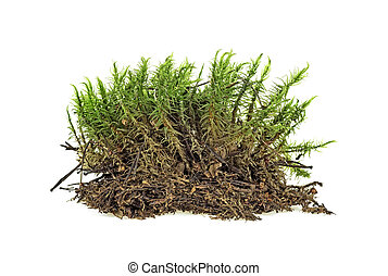 Piece of green moss on white background