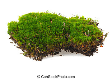 piece of moss isolated on white background