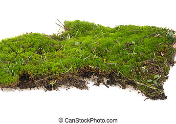piece of moss on a white background