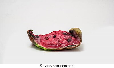 Piece of ripe watermelon rots on white background, time lapse, educational cognitive video.