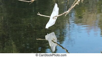 piece of snow on a branch that melts and drops fall into the river