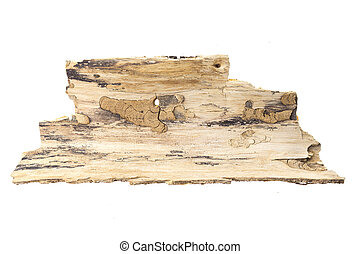 Piece of tree bark, isolated on white background.