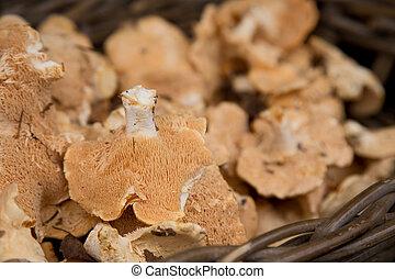 pied de mouton or hedgehog mushrooms.