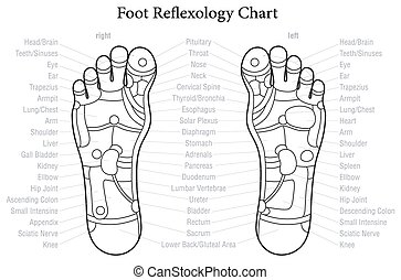 pied, diagramme, reflexology, description
