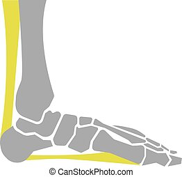 pied plat, fond, os, blanc, icône