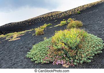 pied, volcan, fleurs