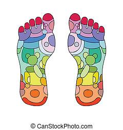 piede, reflexology, punti, massaggio