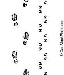 piedi umani, cane, paws
