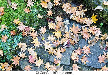 piedra, caído, hojas, escalera, musgo
