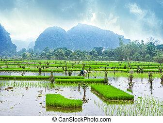piedra caliza, campos, panorama, mes, rocas, asombroso, arroz, vista