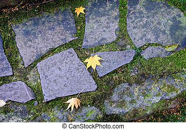 piedra, escalera, con, un, musgo, y, caído, leaves.