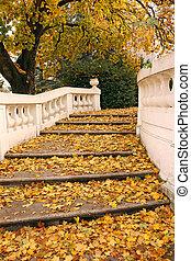 piedra, escalera, y, hojas caídas, otoño, estación