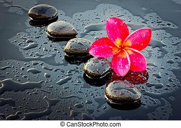 piedra, health., adenium, balneario, flor, rojo