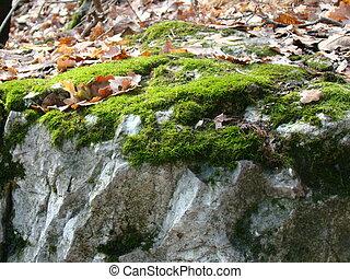 piedra, hojas, musgo