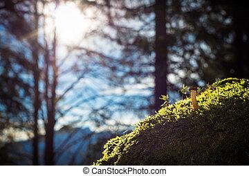 piedra, hongo, musgoso, solo, bosque verde, otoño