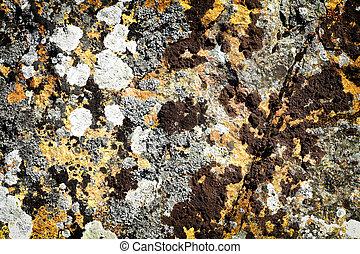 piedra, liquen, plano de fondo, musgo, roca