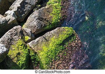 piedras, cubierto, musgoso, mar