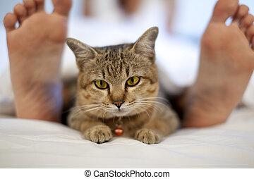 pieds, femme, lit, chat