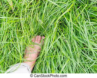 pieds, nu, herbe, vert