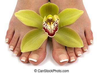 pieds, orchidée