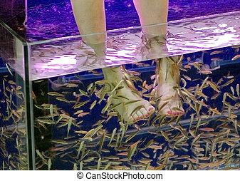 pieds, spa, fish