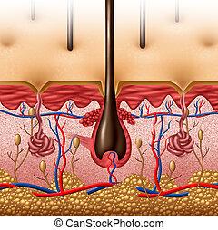 piel, anatomía