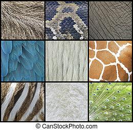 piel animal, piel, y, plumas, collage