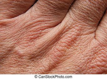 piel humana
