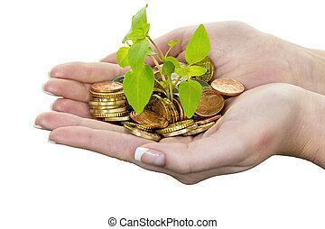 pieniądze, i, plant., symbol, fotografia, oprócz