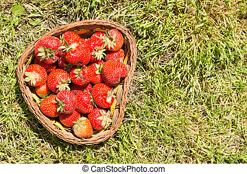 pieno, fondo., fragole, cesto, fresco, erba