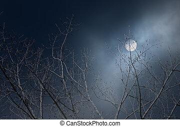 pieno, rami, albero, luna, notte, nebbioso