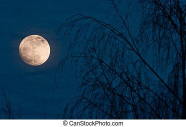 pieno, scena, luna, notte