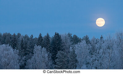 pieno, sopra, gelo, luna, foresta, coperto