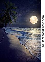 pieno, spiaggia, luna