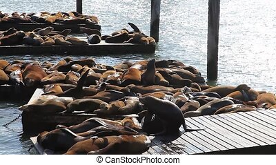 Sea lions resting at Pier 39 in San Francisco. Pier 39 is popular tourist attraction in San Francisco, California, United States. Travel holidays concept.