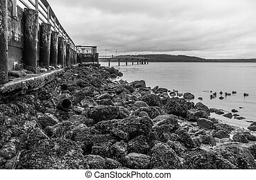 Pier At Low Tide 3