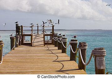 pier full of birds - pier with segulls in the caribbean
