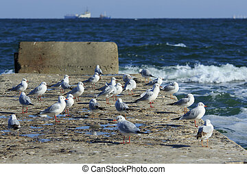 Pier full of gulls