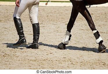 piernas, jinete, caballo