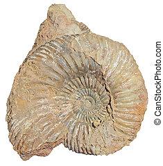 pierre, escargot
