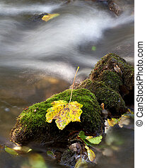 pierre, feuille, ruisseau, coloré, moussu, milieu, érable